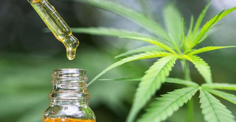 CBD konopljino olje