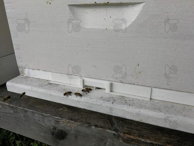 Čebelji koridor